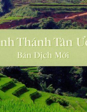 New Testament (Vietnamese)