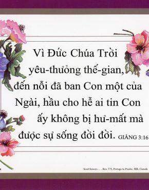 Scripture texts (Vietnamese)