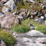 Words of Life CD (Dari)